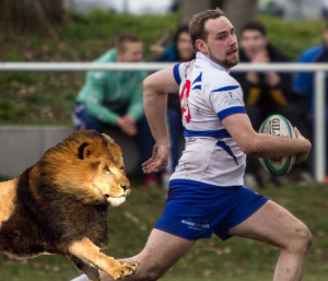 Löwen laufen für die Löwen
